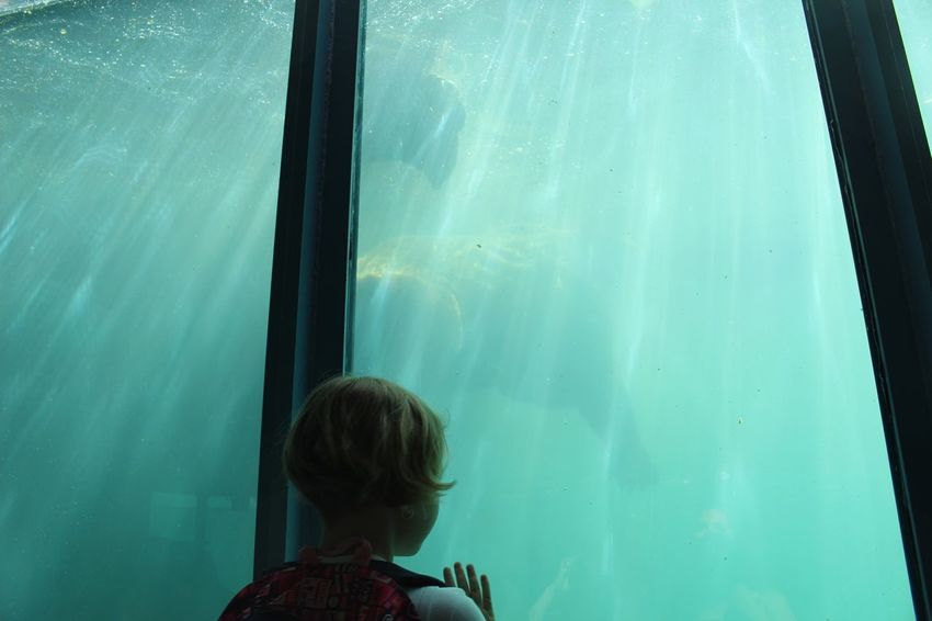 The Photojournalist - 2016 EyeEm Awards Kid Zoo Aquarium Bear Swiming Underwater Child Blue Water Boy Girl Young Cute The Following Sun Flare Sunlight People Of The Oceans Ocean Sea Girl Power Original Experiences Feel The Journey The Photojournalist - 2017 EyeEm Awards This Is Queer Inner Power This Is Family Visual Creativity