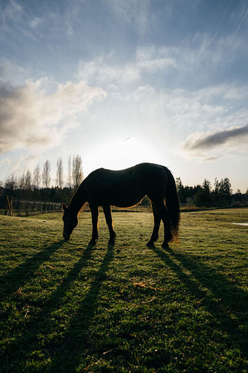 Side view of silhouette horse grazing on land against sky during sunset