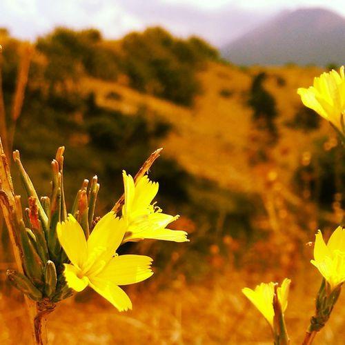 L'oro nel verde della montagna Montagna Natura Fiori Mountain nature flowers green gold