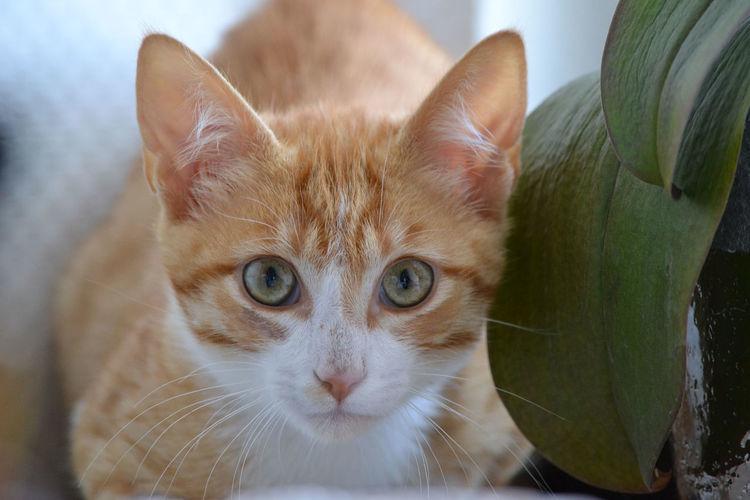 Cat Mammal