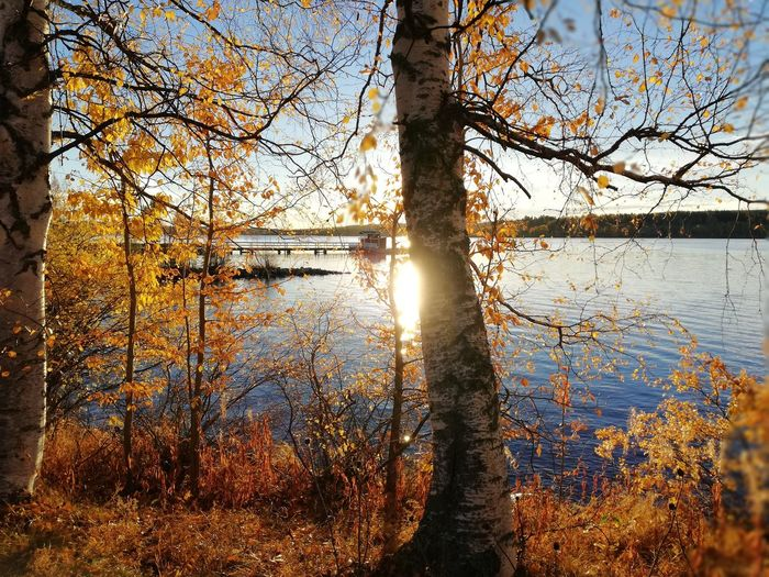 Autumn Storsjön Jämtland Autumn🍁🍁🍁 Autumn colors Autumn Leaves Tree Water Branch Lake Sunlight Sky Close-up Calm Tranquility Tranquil Scene Fall Rays Idyllic Countryside