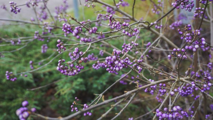 Flowering Plant Flower Plant Growth Fragility Freshness Vulnerability  Beauty In Nature Purple Tree Close-up Nature Day Branch Selective Focus Blossom No People Petal Focus On Foreground