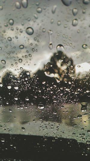 Rain Drops Trees Morning Sunny But Dark