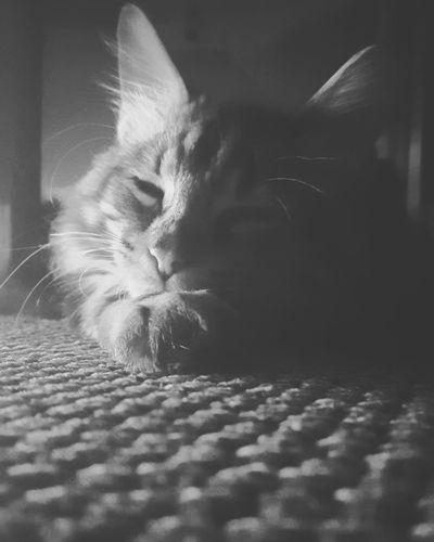 nap time Pets