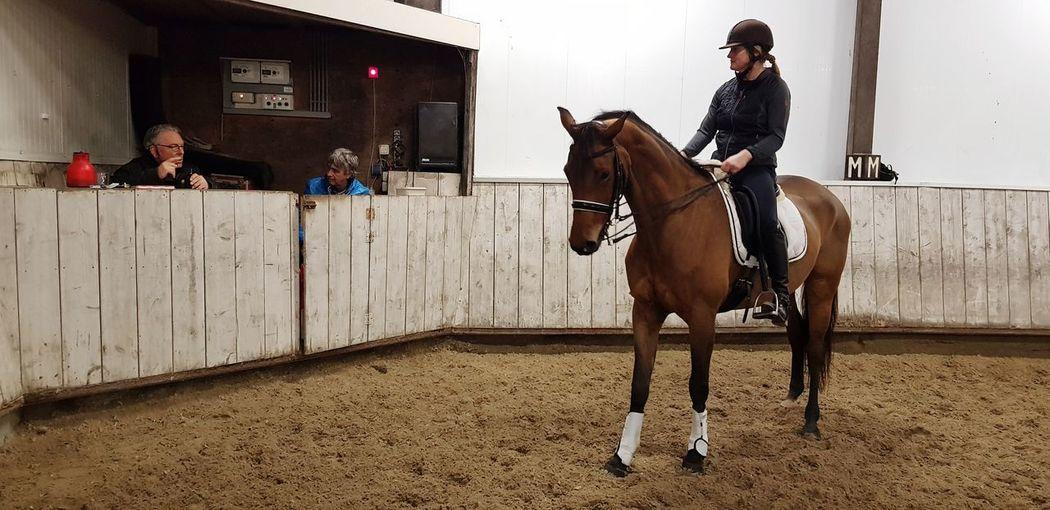 Dressage Training Instructions Mare Paddock Friendship Horse Horseback Riding