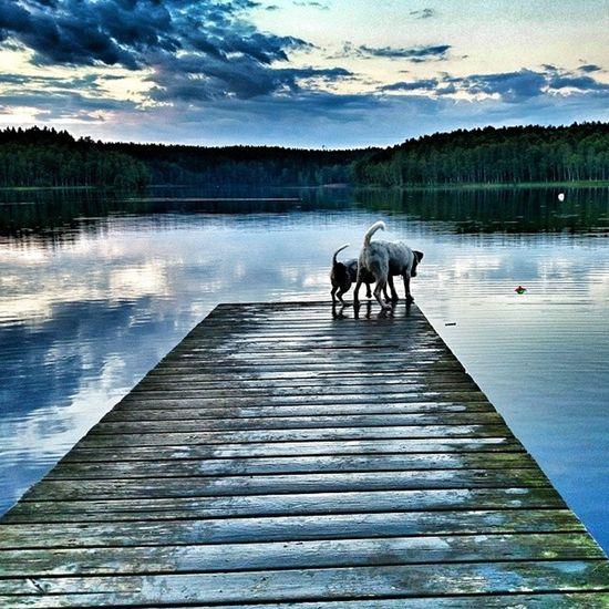 Sjo Lake Bridge Brygga ön halmstad halland sverige sweden hejhalmstad 7dagarbilden yosweden instagram_i_sverige ig_natur loves_sweden ig_ikeda jacky jack jackrussellterrier jakie jackrussell doglove dog instadog hund love kärlek