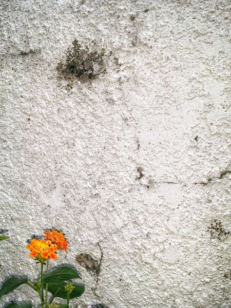 Minimalism Flower Day Flowering Plant No People Nature Plant Outdoors Textured  Growth Wall - Building Feature Full Frame Concrete Fragility