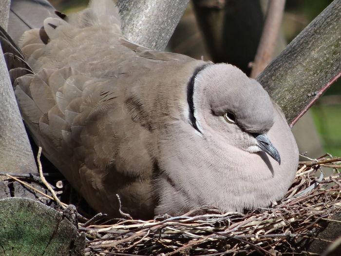 Im the nest