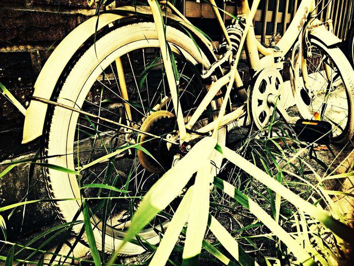abandoned bicycle Bicycle