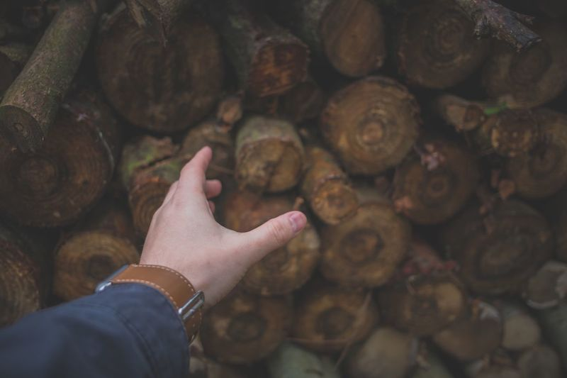Close-Up Of Man Hand Against Logs