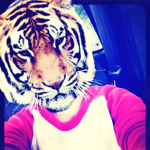 Tiger Grr Good Morning❤