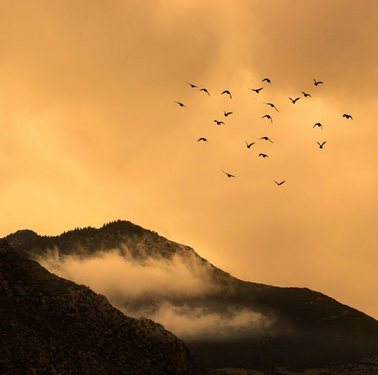 Flock of birds flying in sky with warm sunset