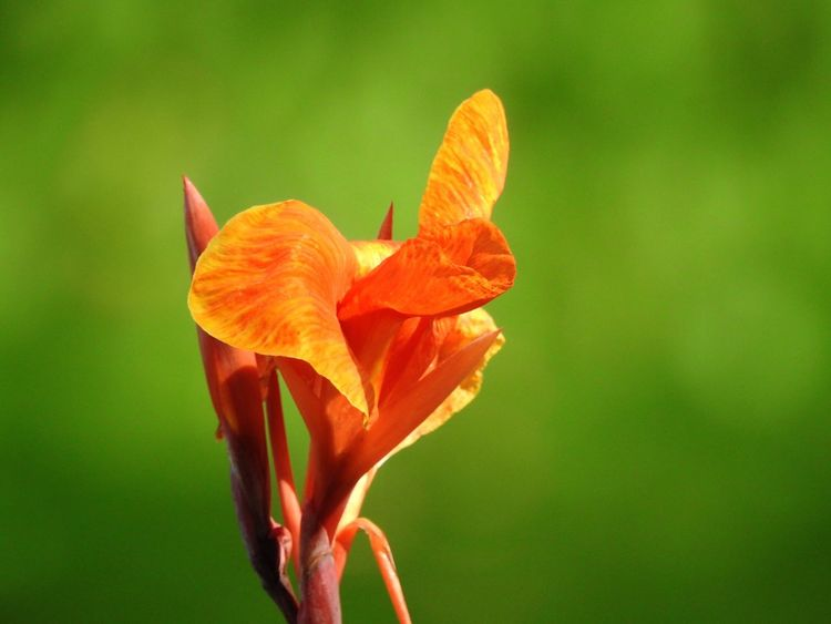 Flower Growth Petal Nature Orange Color Fragility Beauty In Nature Plant Freshness Focus On Foreground Flower Head Outdoors No People Close-up Blooming Day Day Lily