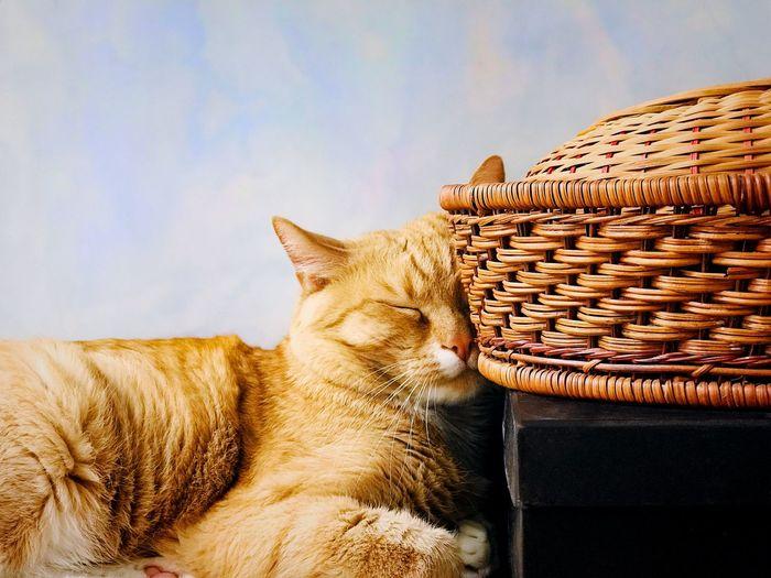 Red cat is sleeping