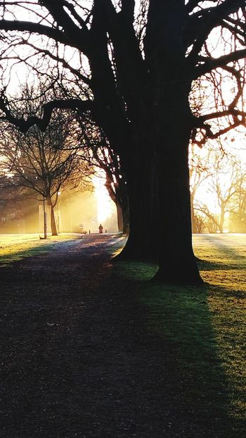 Bath Bath, UK Royal Victoria Park, Bath Park Path Outdoors Sunlight Tree Grass Dawn Sunrise Marlborough Buildings Rays Of Sunshine Rays Of Light Through The Trees Rays Of Sunlight Yellow Sunlight Winter Trees Winter Tree Tree Trunk One Person Walking Cold Morning Misty Morning Misty Cityphotography