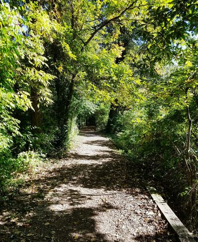 Woodlands Woodwalking The Way Forward Tree Tranquil Scene Sunlight Shadow Beauty In Nature Scenics Nature Footpath Walkway Outdoors Narrow Green Color Nature Hiking Walk In The Woods Park Illinois Illinois Weather