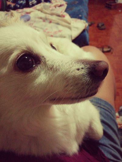 Peennnsaaaannndooooooo!!! 😏😏😏 Dog Pets