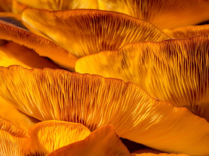 Close-up of orange mushroom