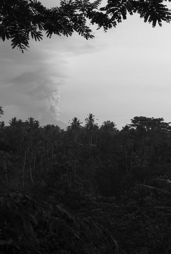 holy gunung agung seen from Keliki Bali (just north of Ubud) 0730 28 Nov 2017. Bali Dramatic Sky INDONESIA Mount Agung Steam Ash Beauty In Nature Day Field Forest Growth Gunung Agung Landscape No People Outdoors Palm Tree Plant Reportage Scenics Tranquil Scene Tranquility Volcano