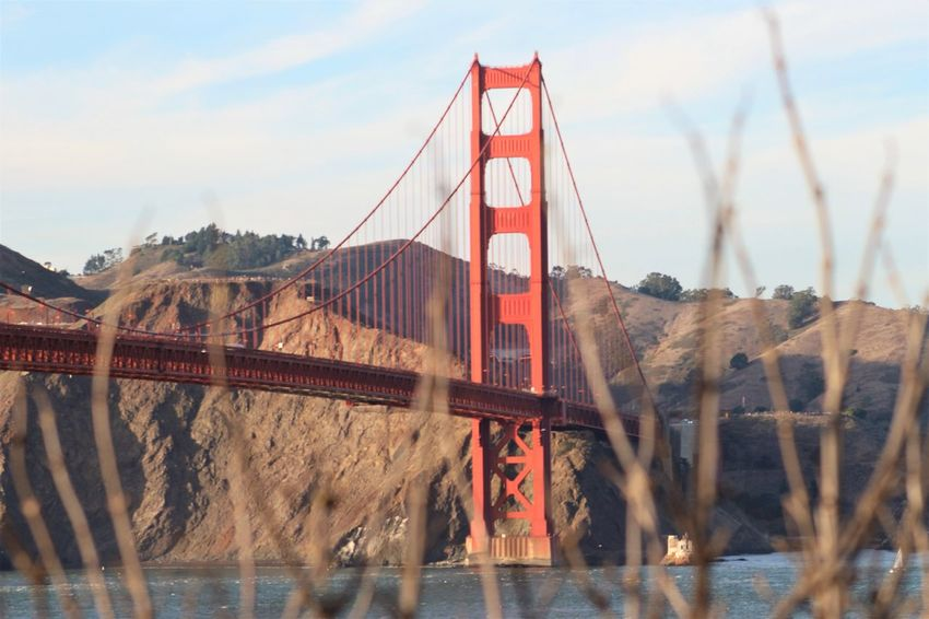 Golden Gate Bridge through the branches Connection River Architecture Outdoors Day No People City Nature