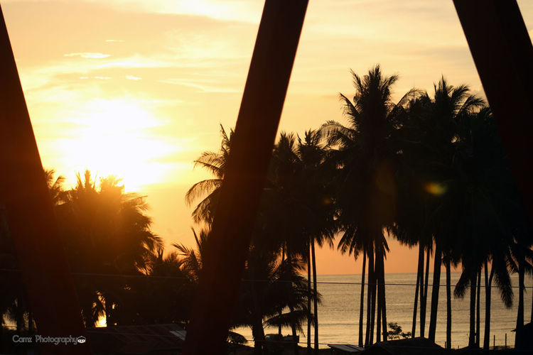 Beach Beauty In Nature Cloud - Sky Day Growth Horizon Over Water Limpapa, Zamboanga City Nature No People Outdoors Palm Tree Scenics Sea Silhouette Sky Sun Sunset Tranquil Scene Tranquility Travel Destinations Tree Tree Trunk Vacations Water