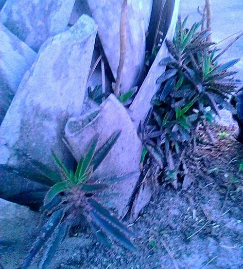 Hugging A Tree Nature Palm Bark