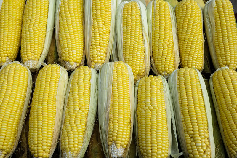 Agriculture Cereal Plant Close-up Corn Corn - Crop Corn On The Cob Day Food Food And Drink Freshness Healthy Eating Healthy Lifestyle No People Outdoors Sweetcorn SWERVE  Vegetarian Food Yellow Yellow Flower Visual Feast