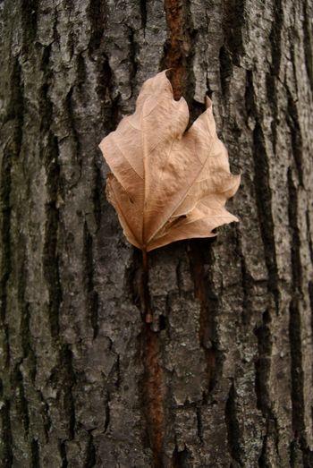 Love Tree Tree