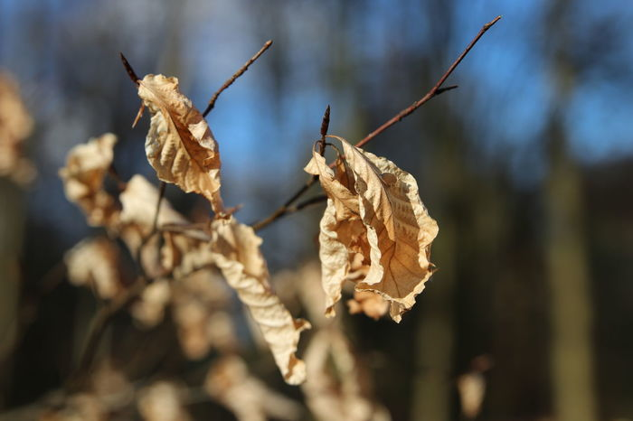 Beauty In Nature Butifull Close-up Day Dead Dried Dried Plant Focus On Foreground Forrest Fragility Fun Happiness Lifestyles Nature No People Outdoors Plant Spring Sunset Tranquility Tree Warm Wood