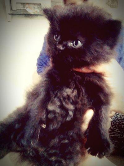 Kitty Hello World