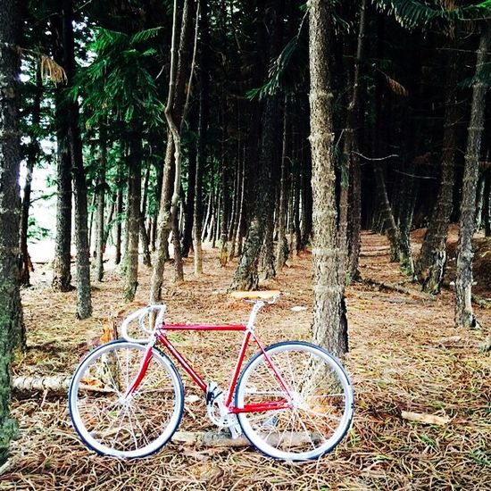 Forward to natural 🌳🌲🌳🚴 Fixedgear OpenEdit Fixed Gear Fixedfreestyle Cycling Cycling Around Njs