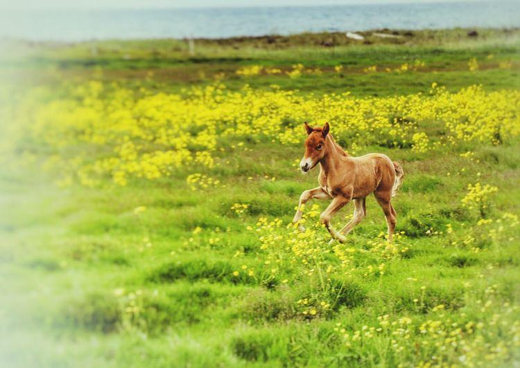 Horse running on grass field