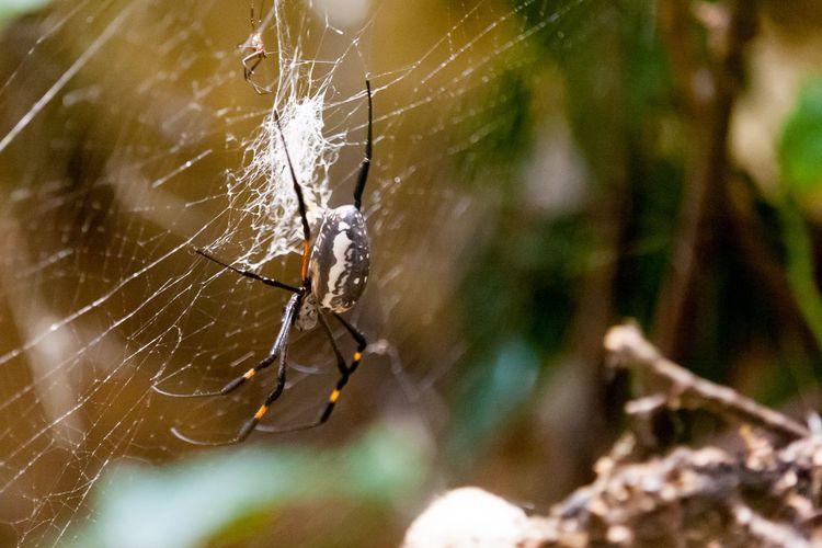 Spider EyeEm