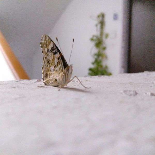 Butterfly One Animal Insect Animal Wildlife Animals In The Wild Animal Themes Day Close-up No People Outdoors Nature