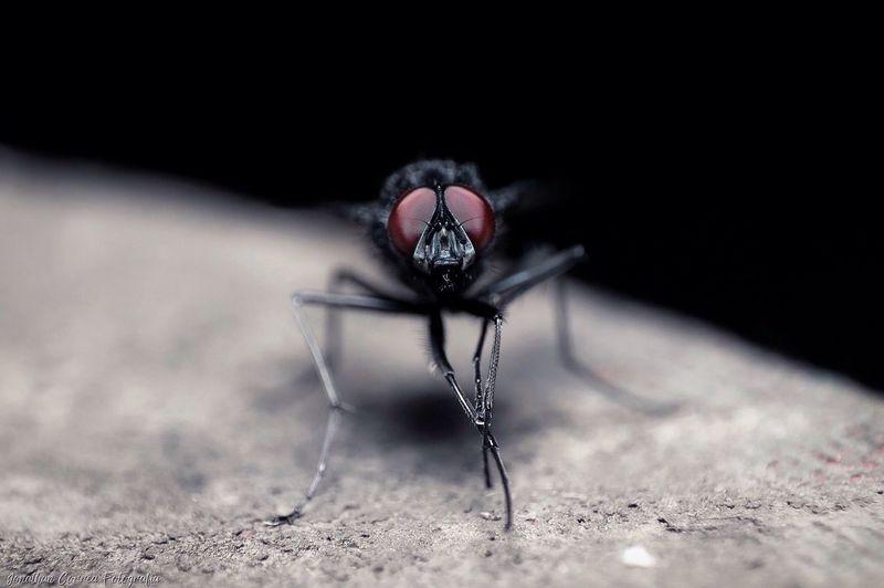 Macro Shot Of Fly On Concrete