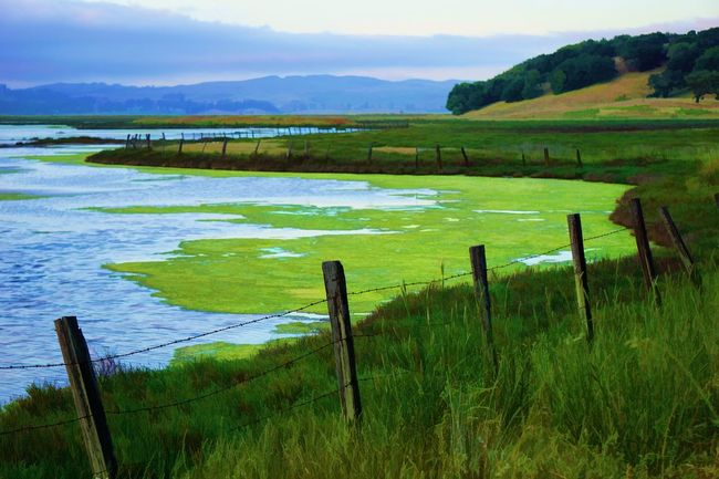Rush Creek Lagoon Beauty In Nature Day Field Grass Green Color Growth Landscape Nature No People Non-urban Scene Outdoors Rural Scene Scenics Sky Tranquil Scene Tranquility Tree Water Wooden Post