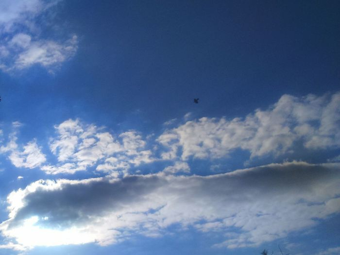 Bird In Flight Bird Flying High Bird Flying In The Sky Scenics Day No People Blue Tranquility Outdoors Cloud - Sky Sky