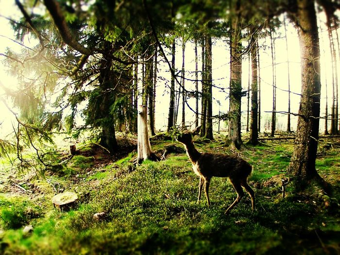 First Eyeem Photo Forest Nature Photography Animals Animal Themes Forest Photography Nature One Animal New Talents