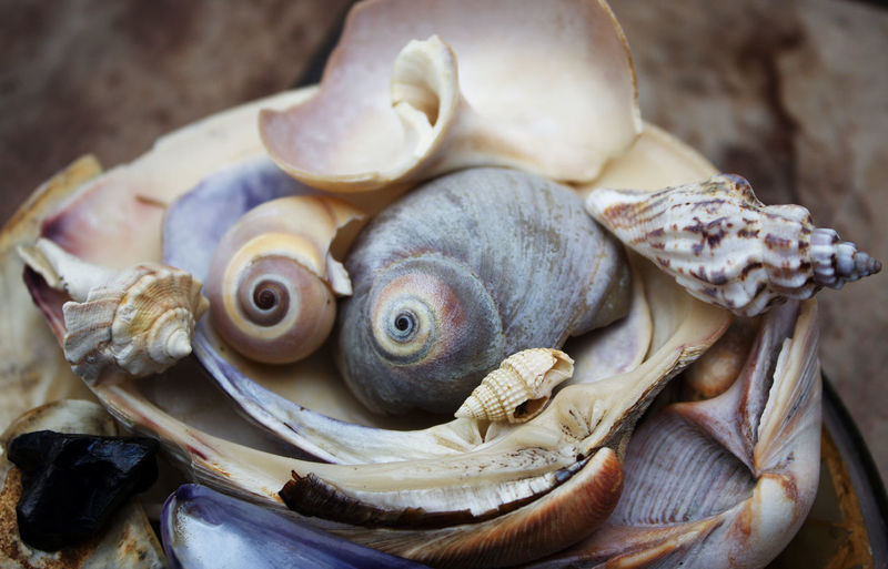 Close-up of an seashells