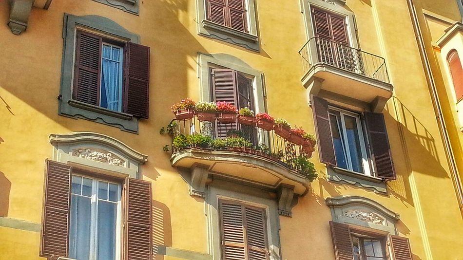 Windows Sunshine Flowerporn Urban Geometry