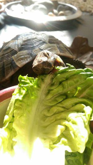 Turtle Tank Mysweetbaby Animal Photography