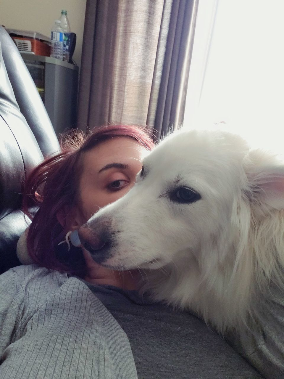 pets, domestic, domestic animals, mammal, one animal, dog, canine, one person, real people, young adult, young women, vertebrate, home interior, lifestyles, headshot, indoors, leisure activity, pet owner, hairstyle