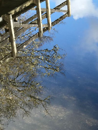 Sky clouds tree