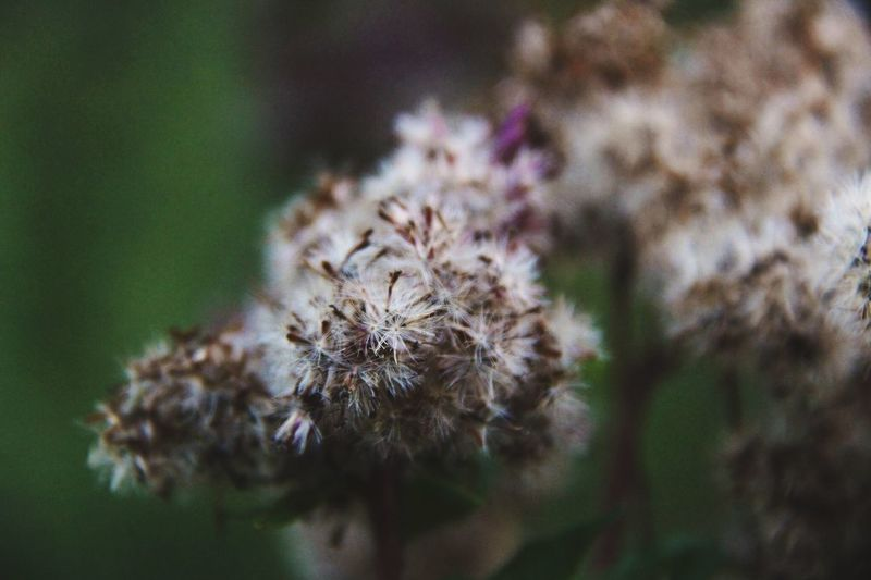🌿 Green 🌿 Flower Nature Focus On Foreground Plant Outdoors Springtime Flower Head Fragility