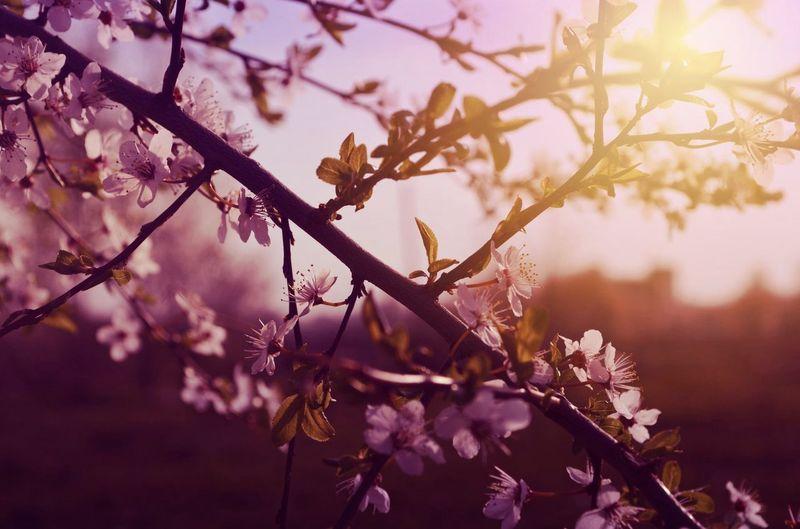 Spring Flowers Soaking Up The Sun Escaping Enjoying The Sun Hugging A Tree Relaxing Walking Around Taking Photos Enjoying Life