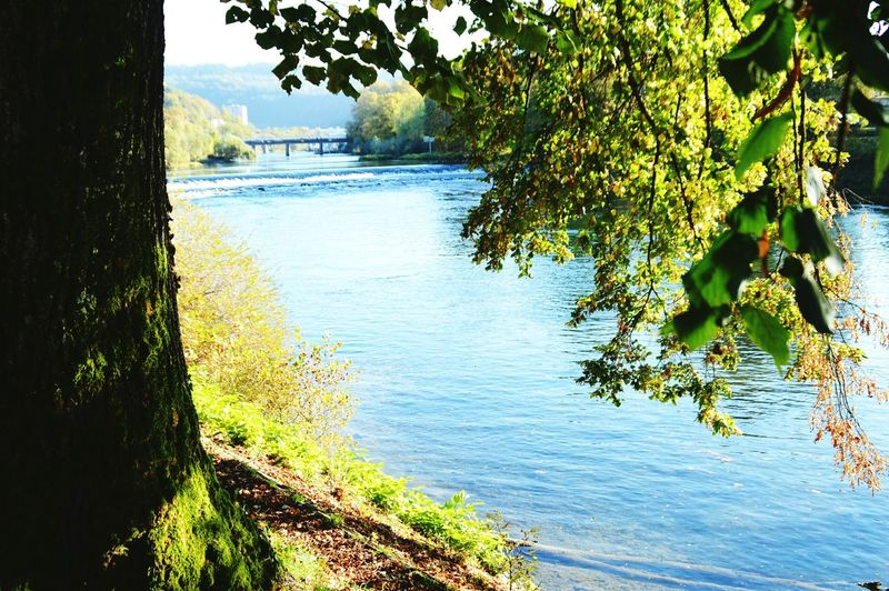 Besançon Tree Water Growth Nature Reflection Lake Beauty In Nature Day Tranquility Green Color Outdoors No People Sky Besancon Doubs Franchecomte France Beauty In Nature Green Color Tranquility Reflection Nature