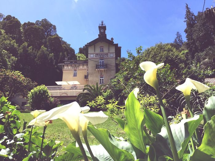Sintra Palace Park Hotel In The Forest Flowers,Plants & Garden Soft Light The Architect - 2015 EyeEm Awards