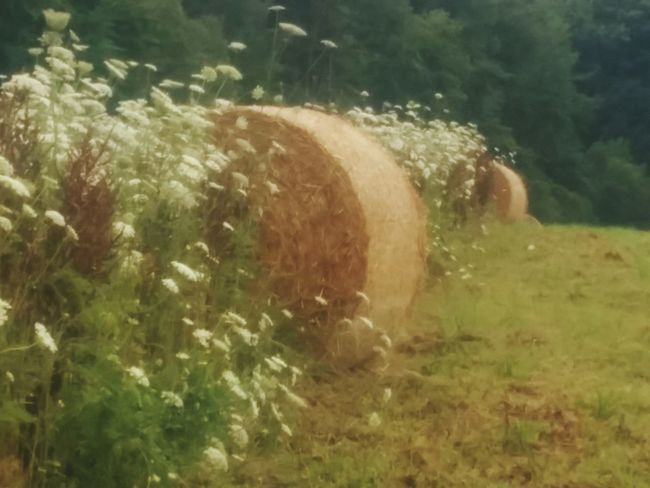 Strohball in Blumen Grass No People Day Outdoors Rural Scene Nature Landscape_Collection Stroh Landscape_photography Landscapes Heu Heuballen Beauty In Nature Landscape Farm Field Hay Bale Grass Flower Strohballen Bale  Wheat blumen Wiesenblumen Wiese  Wiesengras