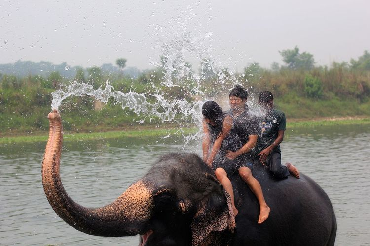Animal Themes Animal Trunk Beauty In Nature Chitwan National Park Day Elephant Friendship Fun Happiness Mammal Motion Nature No People Outdoors PhotoNepal River Sauraha Splashing Spraying Togetherness Water Wet The Photojournalist Sommergefühle Connected By Travel An Eye For Travel