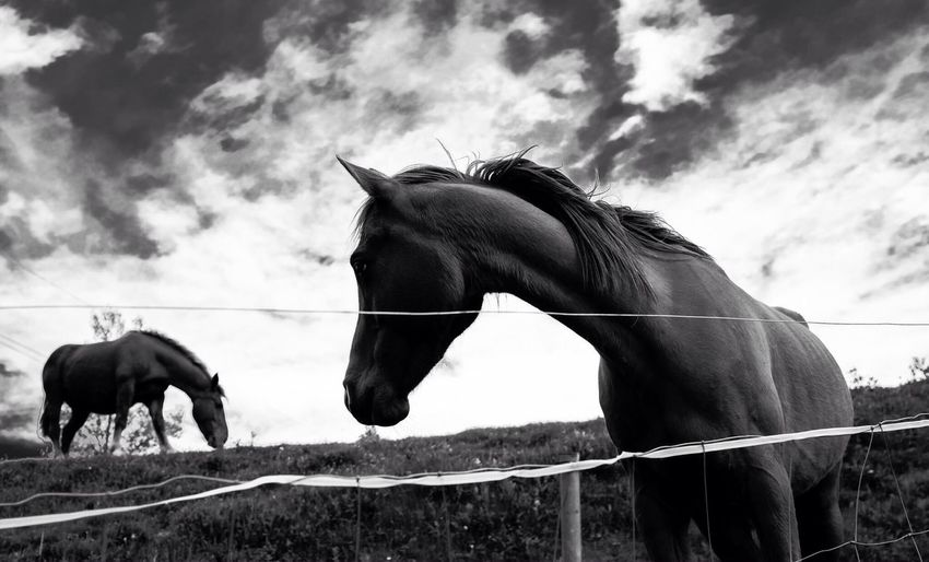 Close up image of two horses on a field